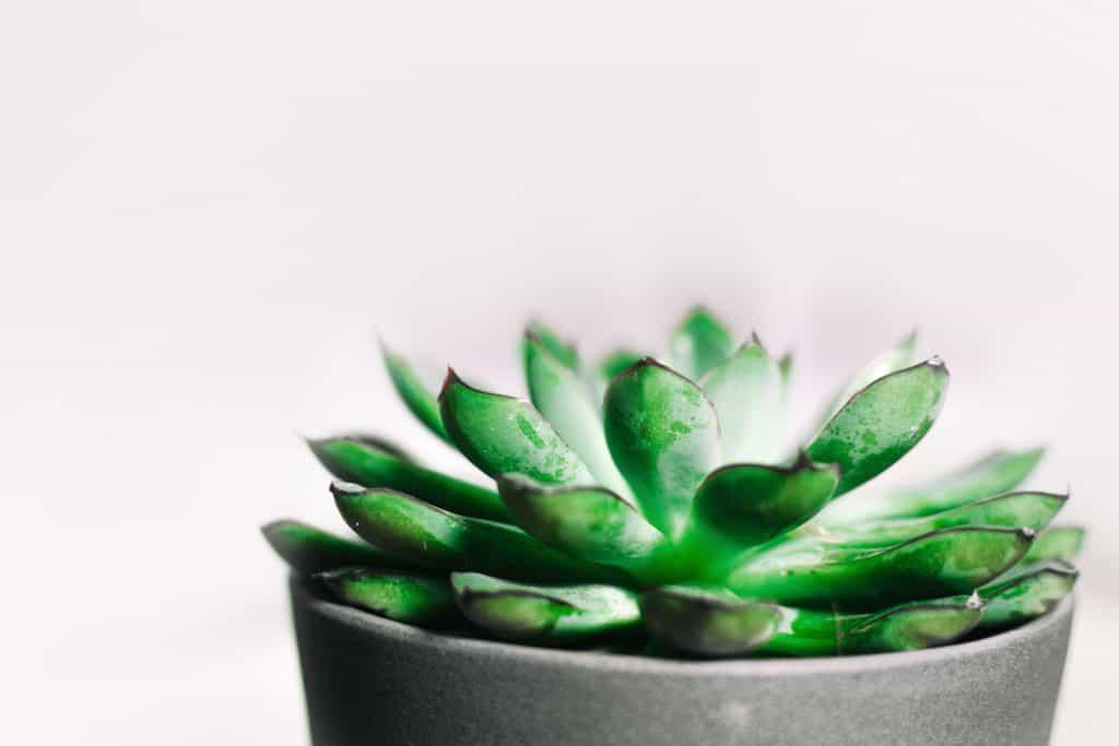 house-plants-hard-to-kill