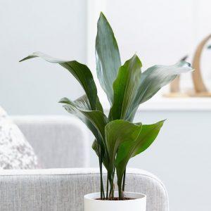 bar room plant