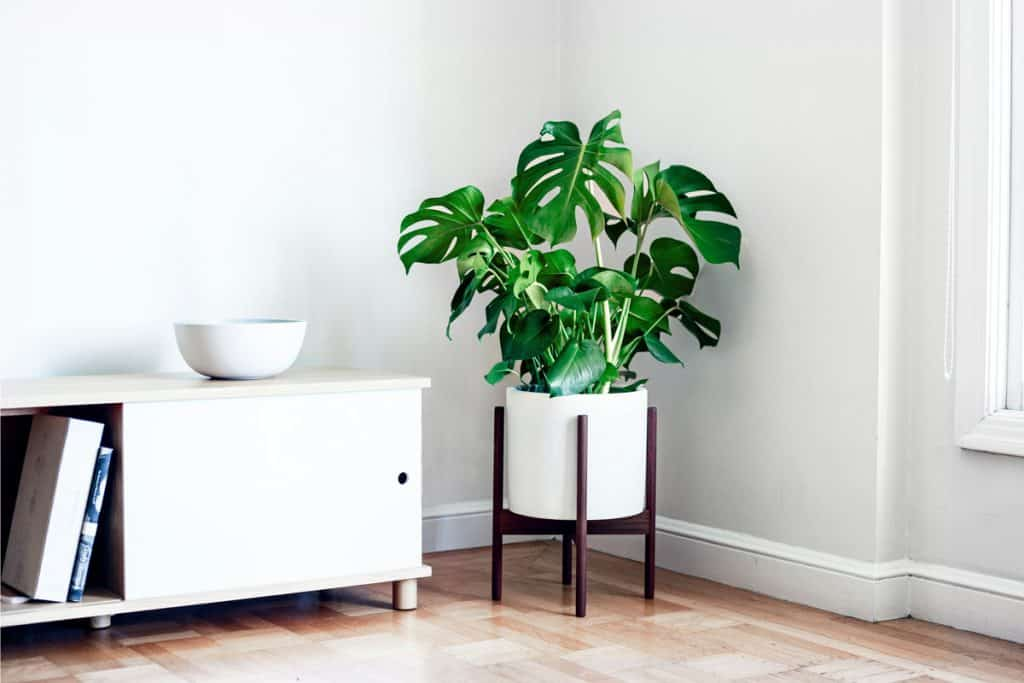 best plants to grow indoors