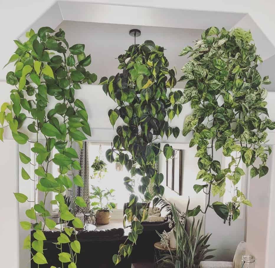 best hanging plants indoor