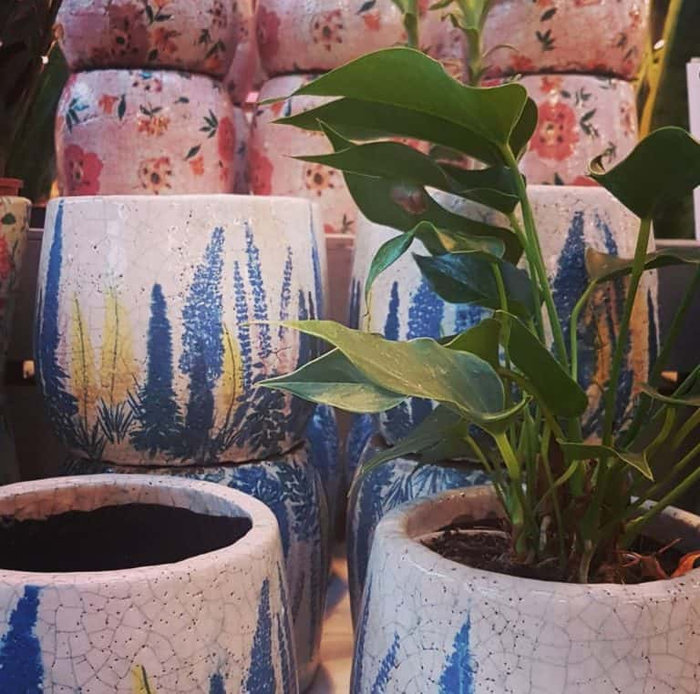 Best Soil for Indoor Plants | Simple Guide