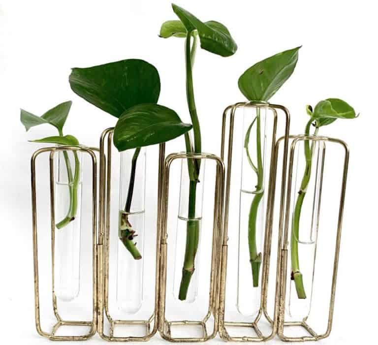 How to propagate pothos   Simple Guide