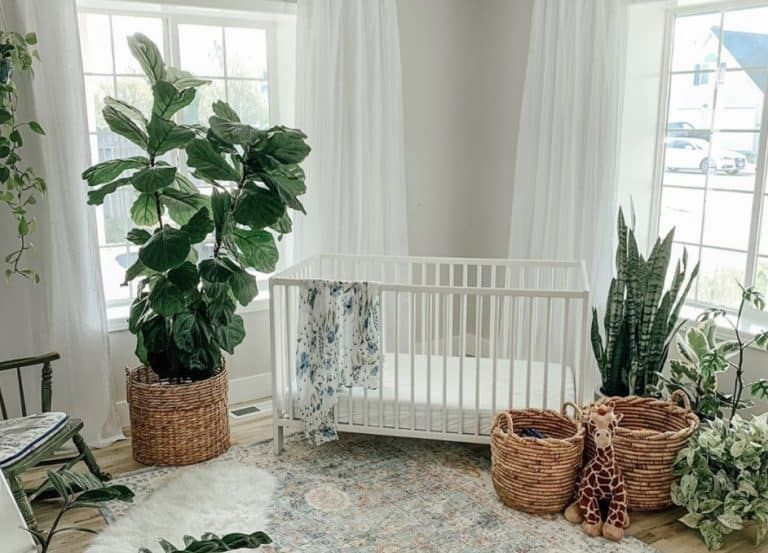 How much light does a fiddle leaf fig need?
